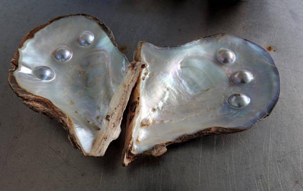 Perlas de agua dulce